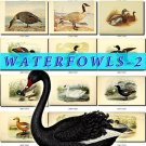 WATERFOWLS-2 Birds 52 vintage print