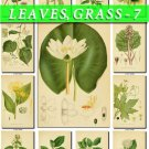 LEAVES GRASS-7 268 vintage print