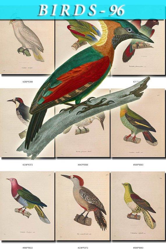 BIRDS-96 127 vintage print