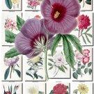 FLOWERS-61 259 vintage print