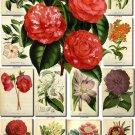 FLOWERS-105 287 vintage print
