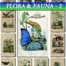 FLORA ,  FAUNA-2 187 vintage print
