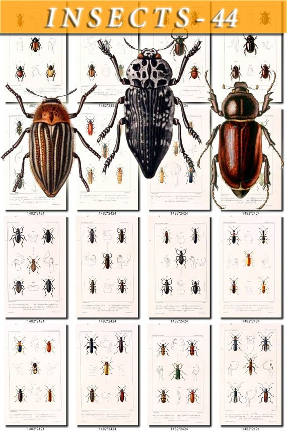 INSECTS-44 101 vintage print