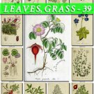 LEAVES GRASS-39 192 vintage print