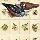 BIRDS-34 228 vintage print