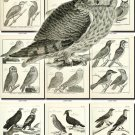BIRDS-40-bw 238 black-, -white vintage print