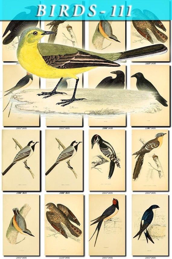 BIRDS-111 125 vintage print
