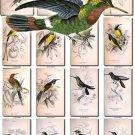 BIRDS-130 54 Sunbirds Nectarinia Wood Snipe Bustard Houbara vintage print