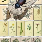 FLORA ,  FAUNA-9 251 vintage print