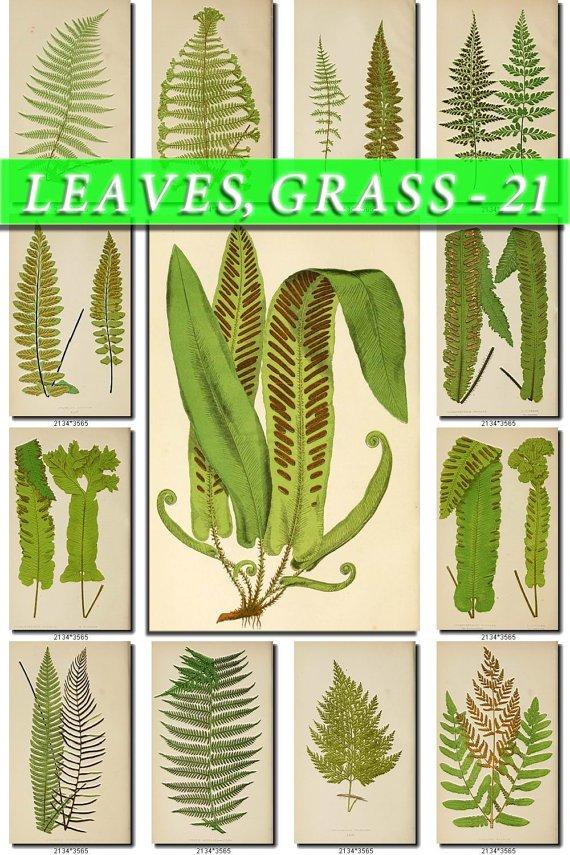 LEAVES GRASS-21 139 vintage print