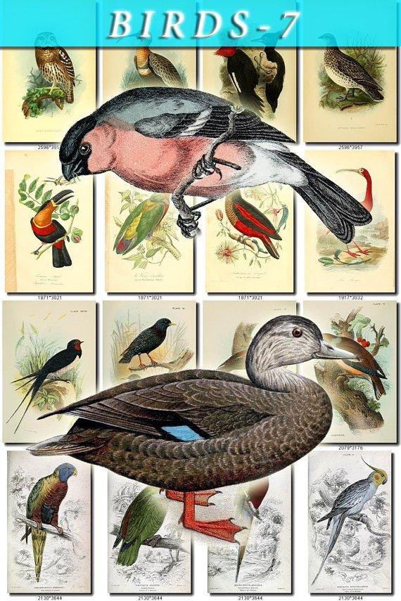 BIRDS-7 203 vintage print