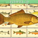 FISHES-13 105 vintage print