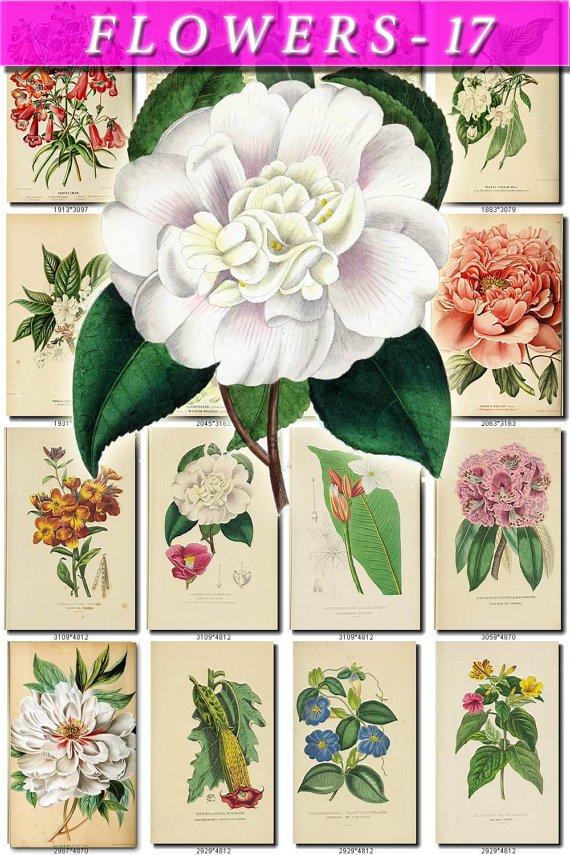 FLOWERS-17 201 vintage print