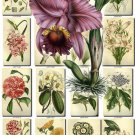 FLOWERS-95 248 vintage print