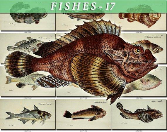 FISHES-17-b9 92 vintage print