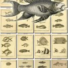 FISHES-48-bw 147 vintage print