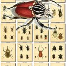 INSECTS-3 487 vintage print