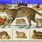 CATS-3 43 vintage print