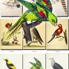 BIRDS-14 262 vintage print