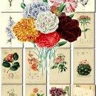 FLOWERS-16 204 vintage print