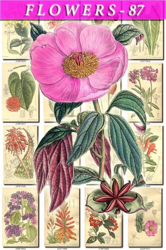 FLOWERS-87 239 vintage print