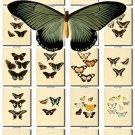 BUTTERFLIES-36 71 vintage print