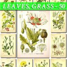LEAVES GRASS-50 160 vintage print