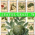 LEAVES GRASS-79 362 vintage print