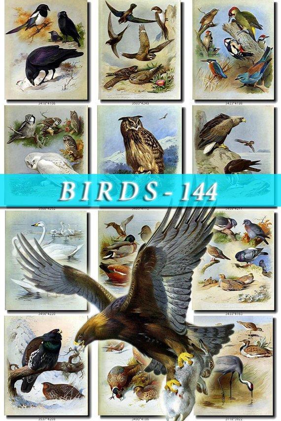 BIRDS-144 80 vintage print
