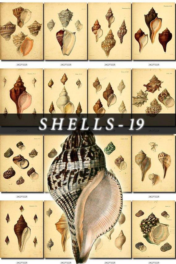 SHELLS-19 199 vintage print