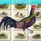 BIRDS-114 70 vintage print