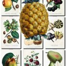 FRUITS VEGETABLES-7 66 vintage print