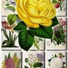 FLOWERS-28 78 vintage print