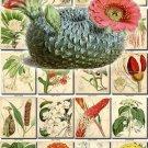 FLOWERS-71 215 vintage print