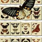 BUTTERFLIES-10 228 vintage print