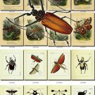 INSECTS-9 206 vintage print