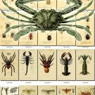 INSECTS-15-b3 291 vintage print