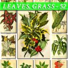 LEAVES GRASS-52 229 vintage print