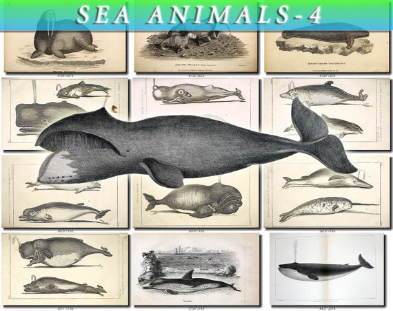 SEA ANIMALS-4-bw 164 vintage print