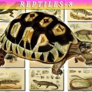 REPTILES & AMPHIBIAS-8-b2 138 vintage print