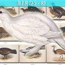 BIRDS-85 103 vintage print