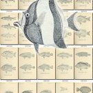 FISHES-14-bw 392 black-, -white vintage print