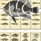 FISHES-28-bw 112 vintage print