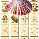 SHELLS-36 123 vintage print
