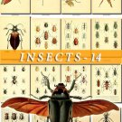 INSECTS-14-b2 386 vintage print