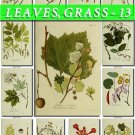 LEAVES GRASS-13 266 vintage print