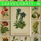 LEAVES GRASS-16 233 vintage print