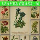 LEAVES GRASS-16 233 vintage print