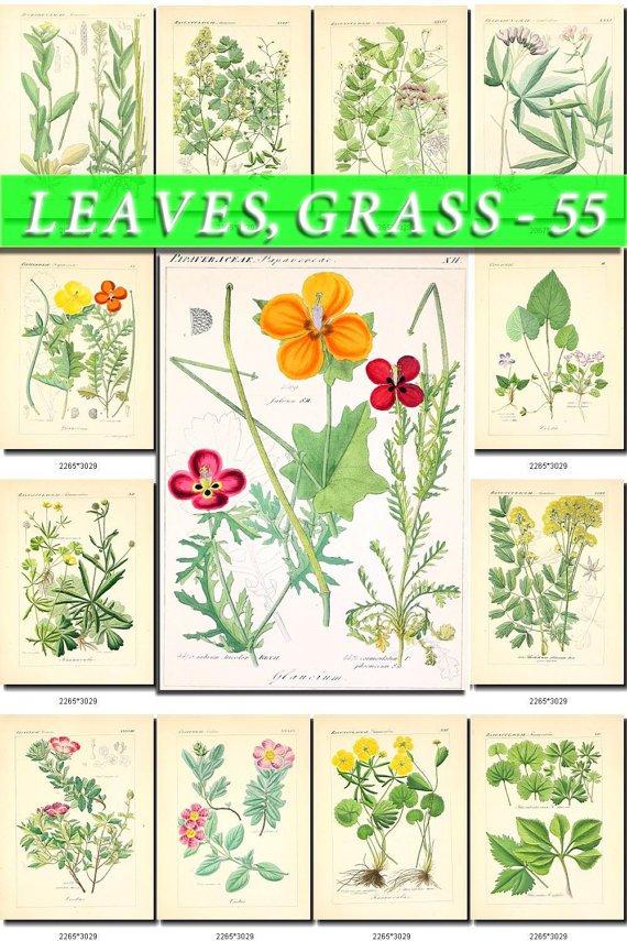 LEAVES GRASS-55 208 vintage print