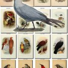 BIRDS-166 65 vintage print